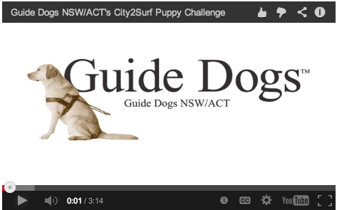 Guide Dogs NSW/ACT interview campaign