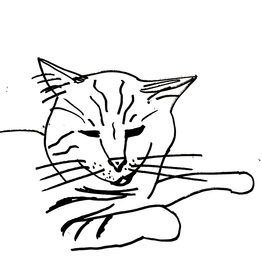 30-day minimalist cat drawing challenge friend version